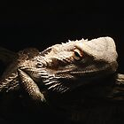Dragdor The Bearded Dragon by taita