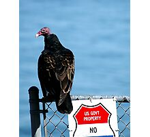 Turkey Buzzard Photographic Print