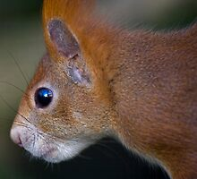 Squirrel-Eye View by Krys Bailey