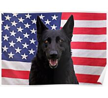Black German Shepherd - U.S.A. Poster