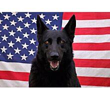 Black German Shepherd - U.S.A. Photographic Print