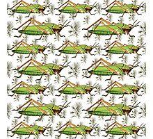 grasshopper pattern 1 Photographic Print