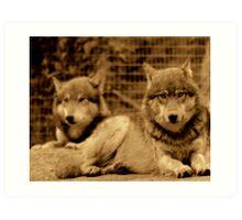 Big Bad Wolves Art Print