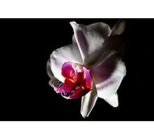 Double Headed Orchid Photographic Print
