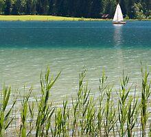 Last Summer... by Walter Quirtmair