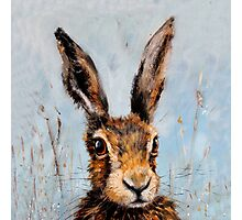 Holly Hare Photographic Print