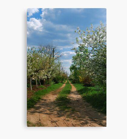 Rural road in spring Canvas Print