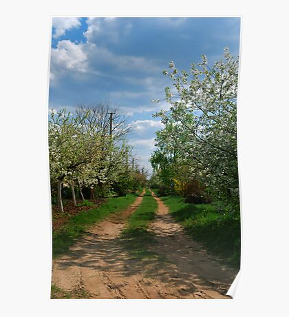 Rural road in spring Poster