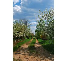 Rural road in spring Photographic Print