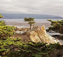 The Lone Cypress, Pebble Beach by Yair Karelic