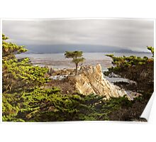 The Lone Cypress, Pebble Beach Poster