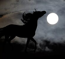 Horse silhouette by franceslewis