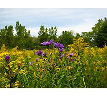 Asters And Goldenrod Photographic Print