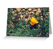 Lonely Golden Poppy Greeting Card