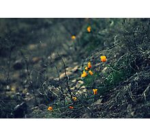 Bright Spot on a Gloomy Day Photographic Print