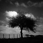 THE LONE TREE by leonie7