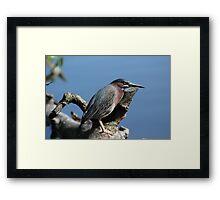 Small Heron Framed Print