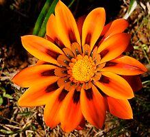 flowers by BaZZuKa