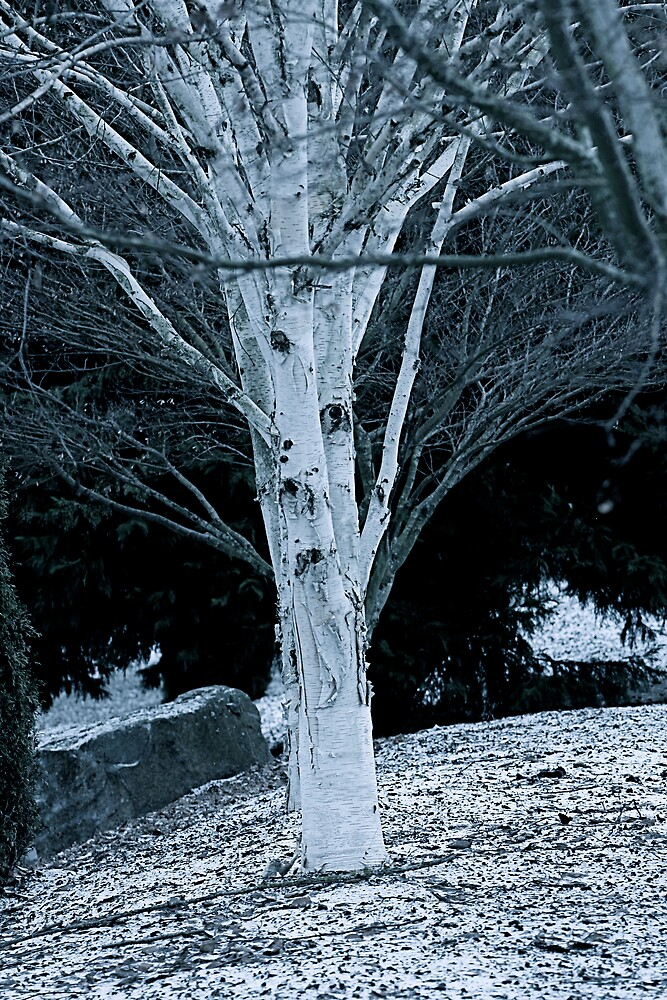 Winter Comes Too Soon by IanPharesPhoto