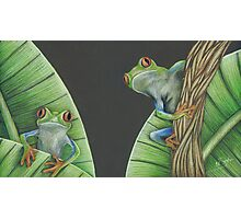 Red Eyed Frogs Photographic Print