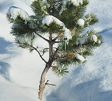 Tiny Pine Buried by J. D. Adsit