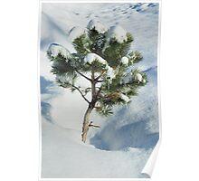 Tiny Pine Buried Poster