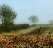 Misty Morning by A90Six