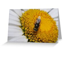 Insect on Daisy Greeting Card
