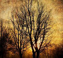 Morning Tree by Simon Duckworth
