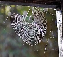 Spider's Web with Autumn Sun by Chris Monks