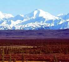 The Hiker - Denali National Park, Alaska by Harry Snowden
