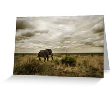 Lone Bull Greeting Card