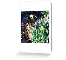 Cat In The Daffodils Greeting Card