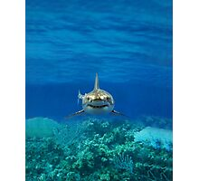 SHARK IPHONE CASE 1 Photographic Print