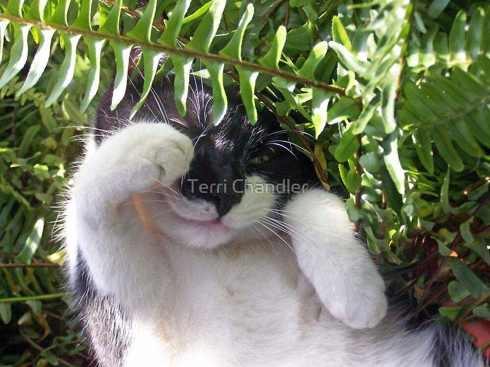 Paws Among the Ferns by Terri Chandler