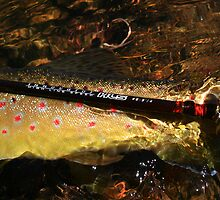 taggerty trout.. by wildfish