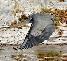 Big for a Snow Bird by Kenneth Haley