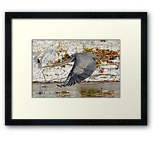 Big for a Snow Bird Framed Print
