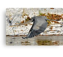 Big for a Snow Bird Canvas Print