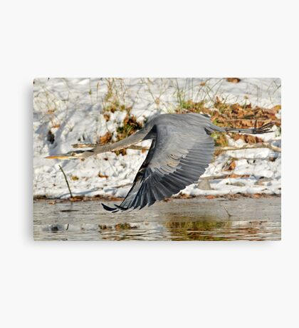 Big for a Snow Bird Metal Print