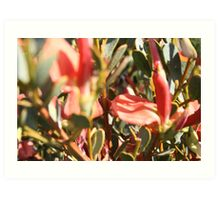 Native flowers at Coffin Bay, S.A. Art Print