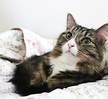 Cute Cat Renji Bed Time by Renata Ilciukaite