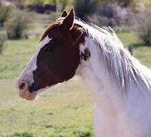 Horse Fun by NicholeHyde