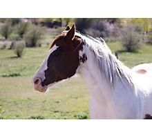 Horse Fun Photographic Print