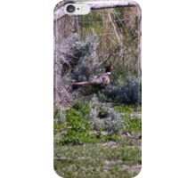 Pheasant Season iPhone Case/Skin