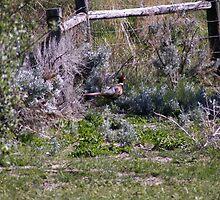 Pheasant Season by NicholeHyde