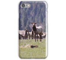 Herd of Elk iPhone Case/Skin