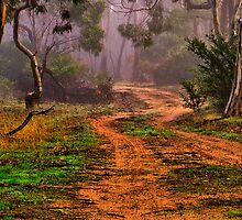 """""""Meandering into the Mist"""" by Phil Thomson IPA"""