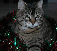 Zoe the wondercat (Feral Oriental Tabby) by warriorprincess