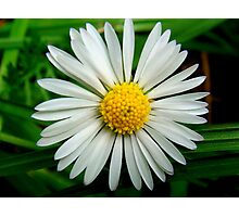 Small Flower Photographic Print